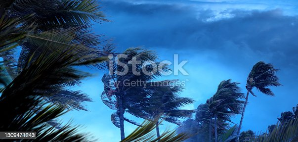 istock Tropical storm and palm trees over spooky storm clouds 1309471243