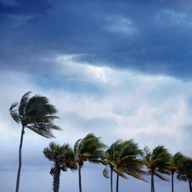 Tropical storm and waving palm trees stock photo
