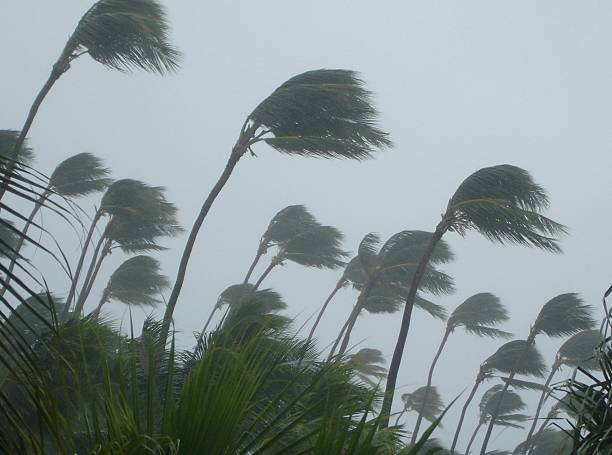tropical storm - blowing stock photos and pictures