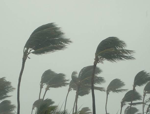 Tropical storm picture id480386290?b=1&k=6&m=480386290&s=612x612&w=0&h=ylyu9d fcp4kveg uzq fjfzja6riwrspdxilfagfmg=
