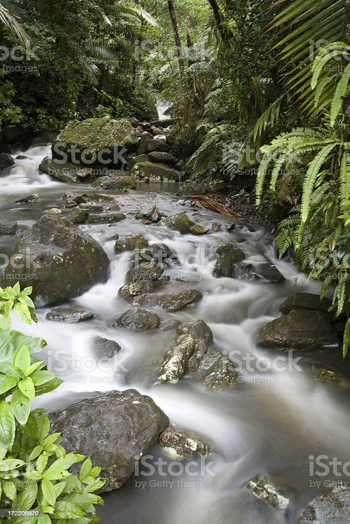 Tropical Stream royalty-free stock photo