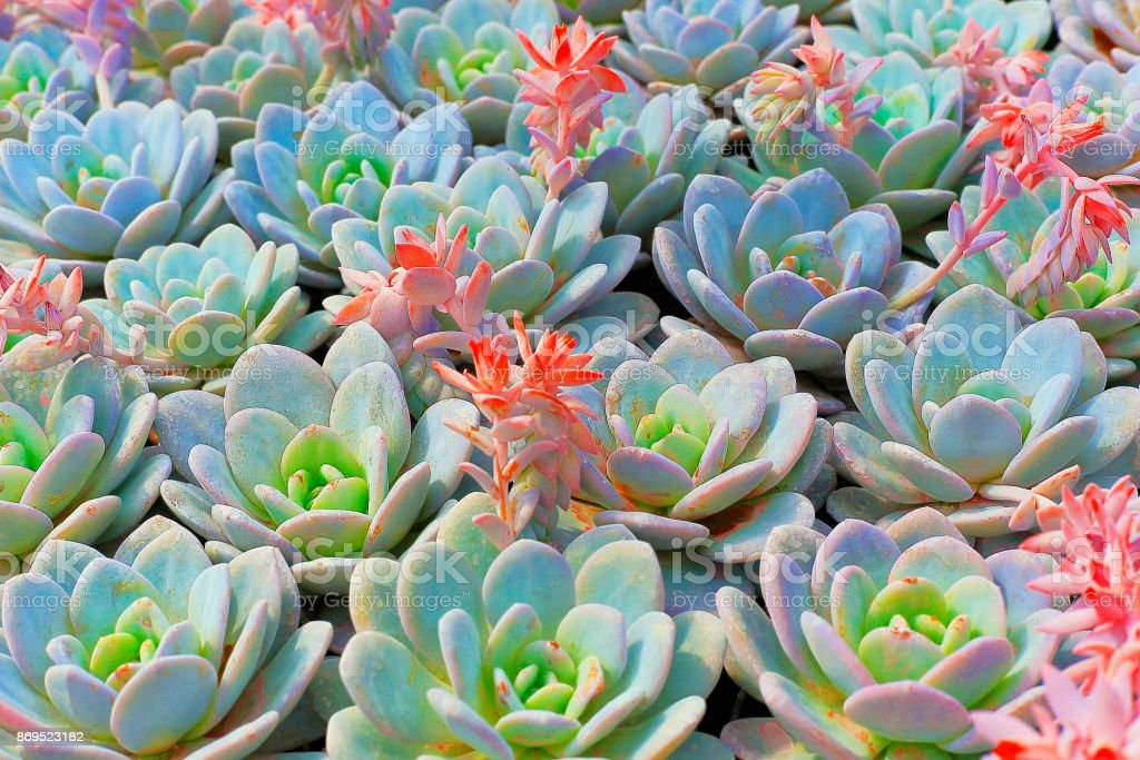Tropical succulent plants natural pattern beauty in nature succulent tropical succulent plants natural pattern beauty in nature succulent with pink flowers in bloom mightylinksfo