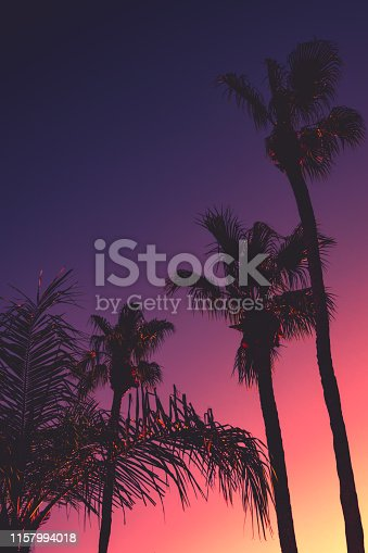 Tropical Vacation Party Background With Palm Trees and Copy Space