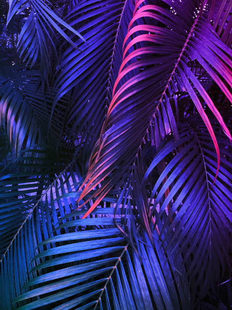 tropical summer vertical background, exotic leaf with neon party glow stock photo