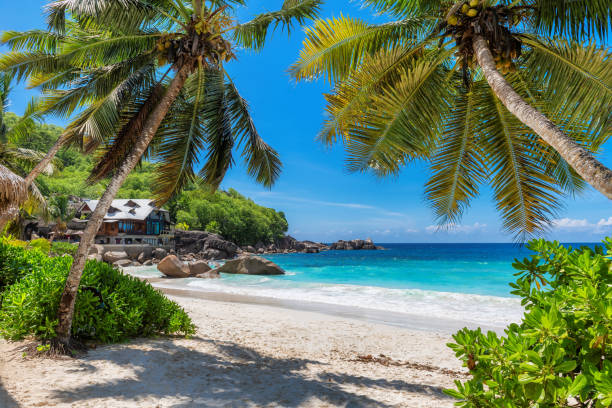 Tropical Sunny beach with palm trees and turquoise sea. stock photo