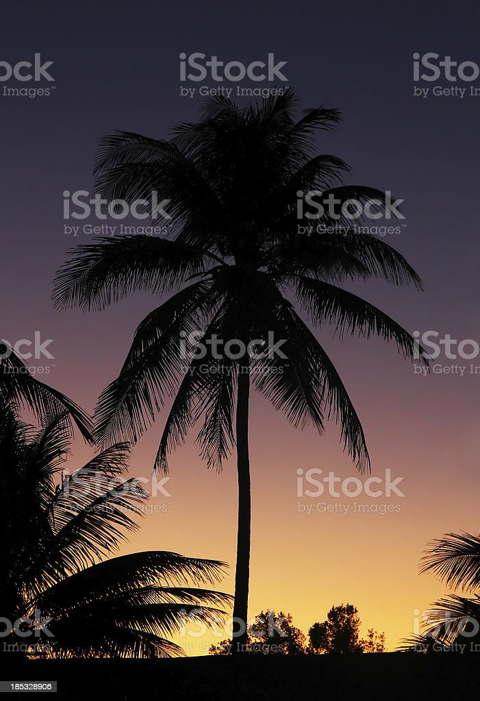 Tropical Sunset and Palm Tree royalty-free stock photo