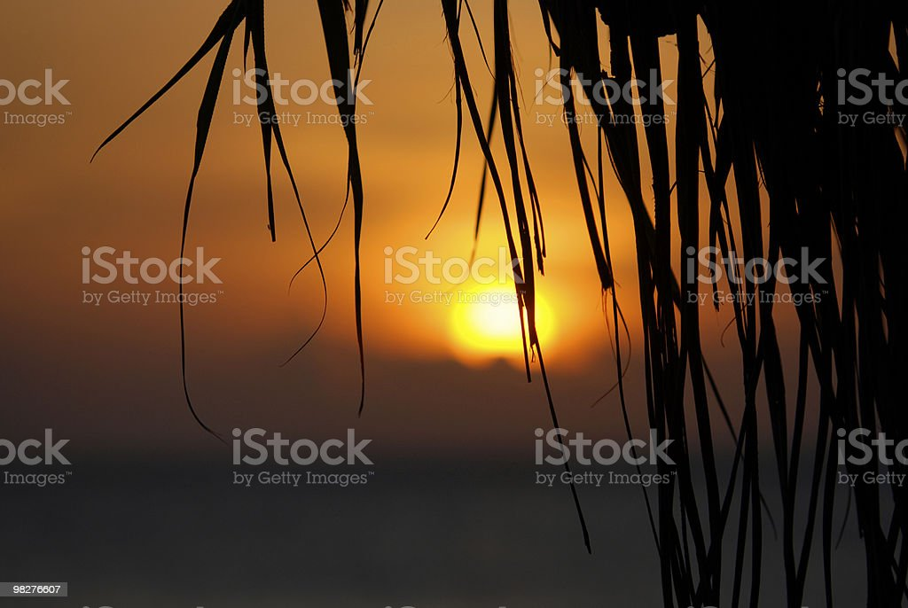 tropical sunset with palm leafs royalty-free stock photo