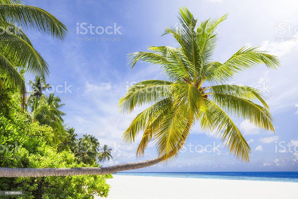 Tropical Sunshine Island royalty-free stock photo