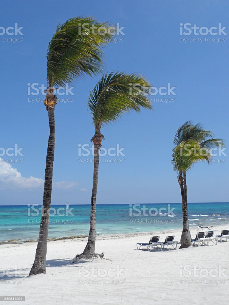 Tropical Swaying Palm Trees White Sand Beach Scene stock photo