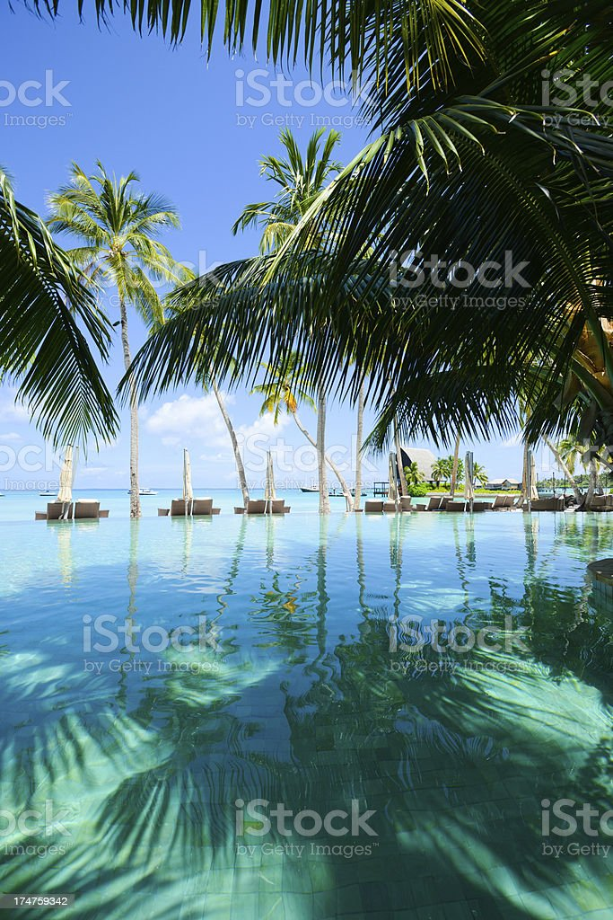 Tropical Swimming Pool stock photo