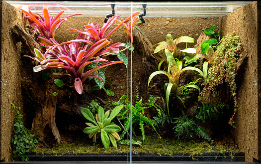 tropical terrarium or pet tank for frogs, lizards or geckos. A rain forest vivarium