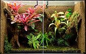 tropical terrarium or pet tank for frogs, lizards or geckos. A rain forest vivarium