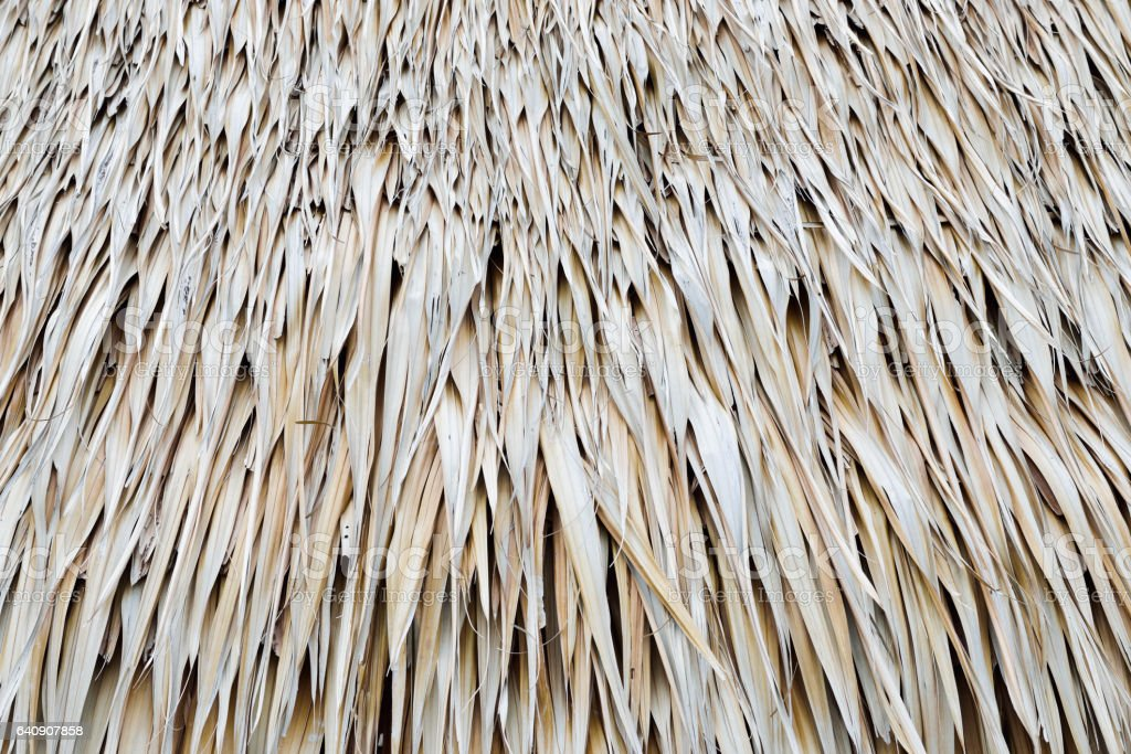 Tropical thatch old roof for background stock photo