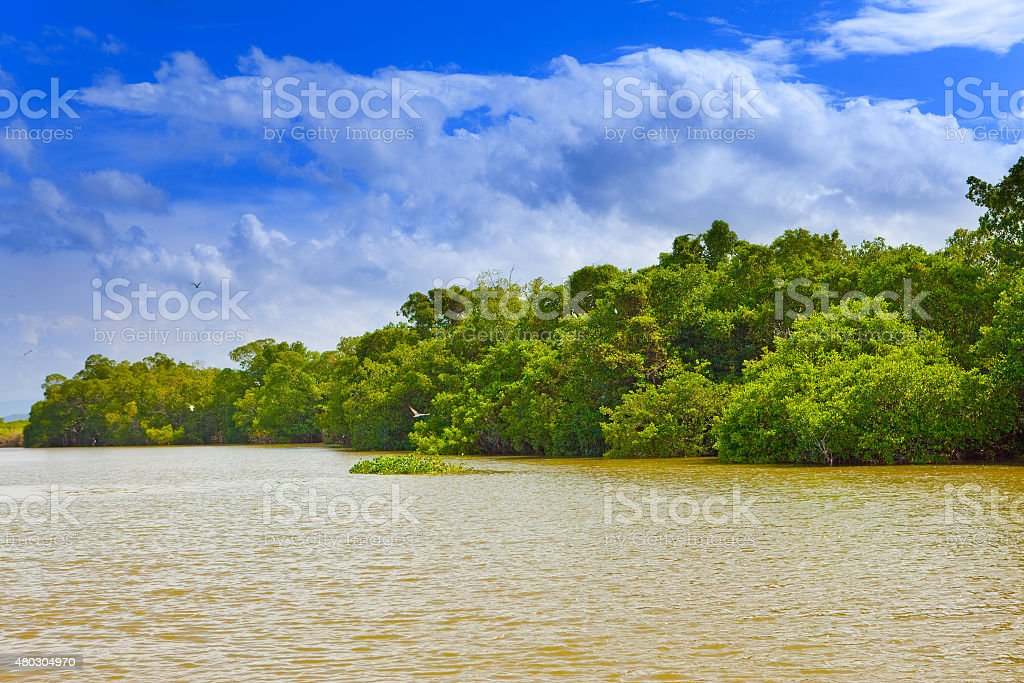 Tropical thickets mangrove forest on the Black river. Jamaica stock photo