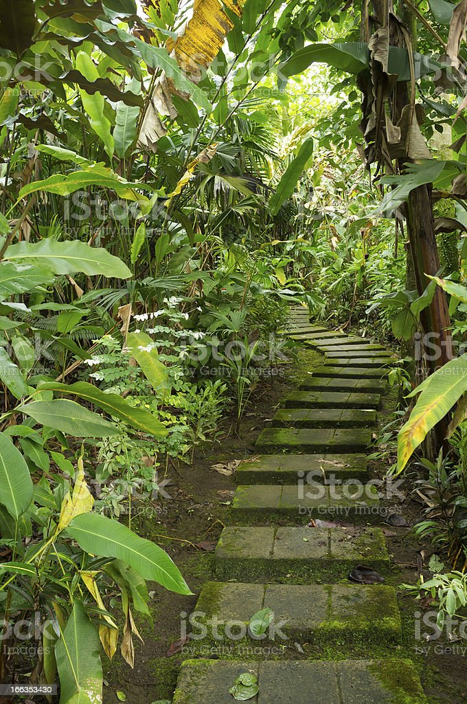 Tropical trail royalty-free stock photo