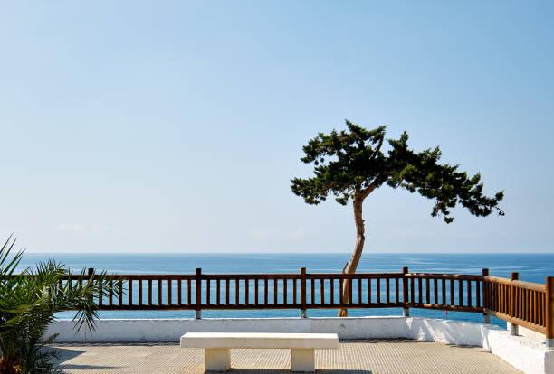 Tropischer Baum gegen Mittelmeer – Foto