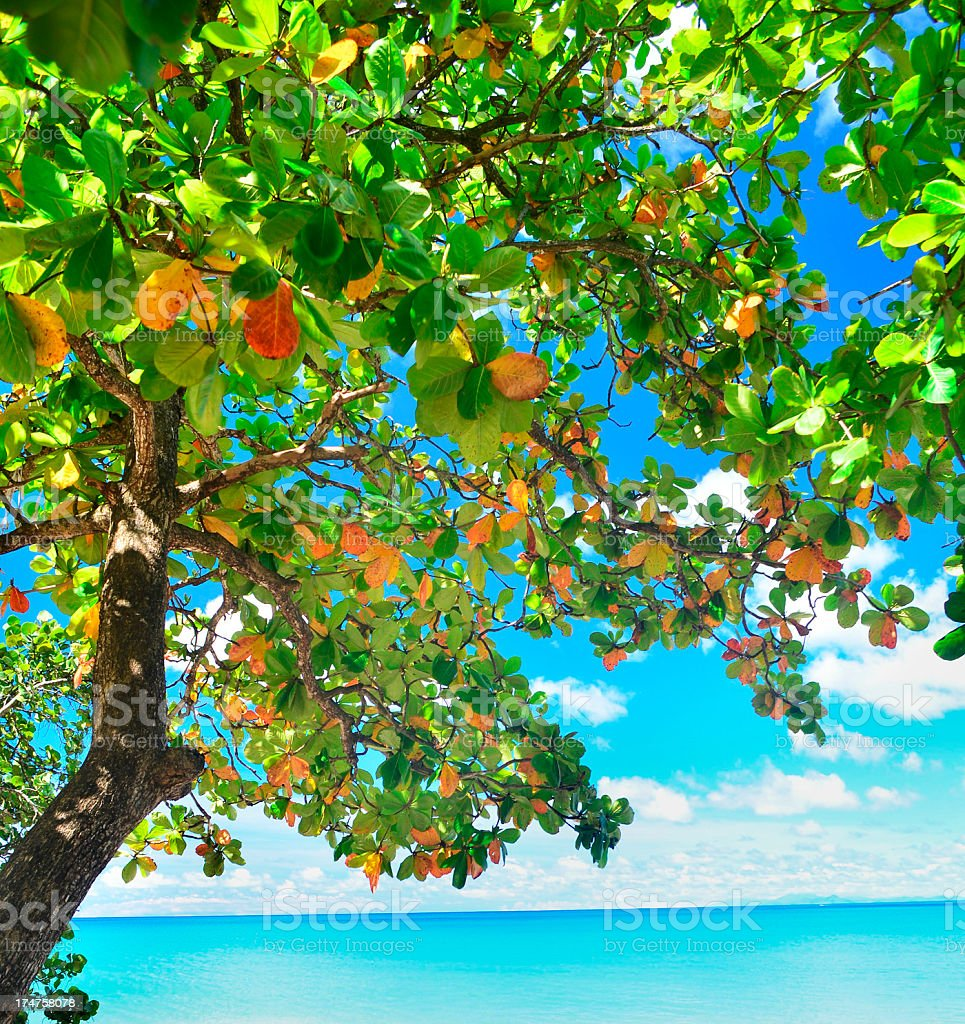 tropical tree and beach royalty-free stock photo
