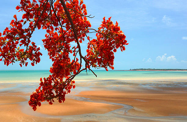 tropical tree and sandy beach, northern territory, australia - darwin stock photos and pictures