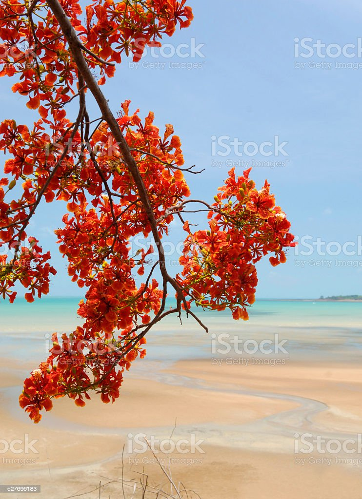 Tropical Tree and sandy beach, Northern Territory, Australia stock photo