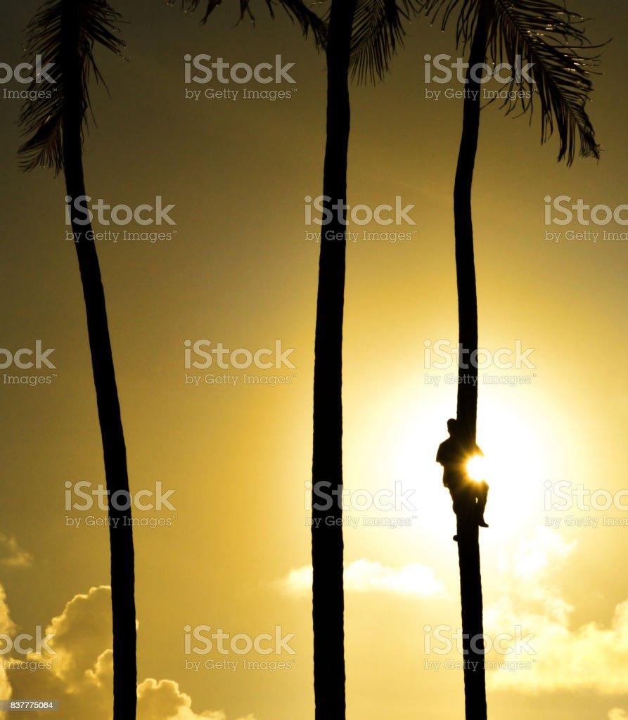 Tropical tree climber stock photo