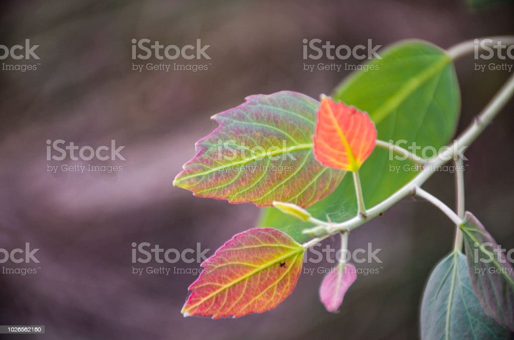 Tropical tree leaves stock photo
