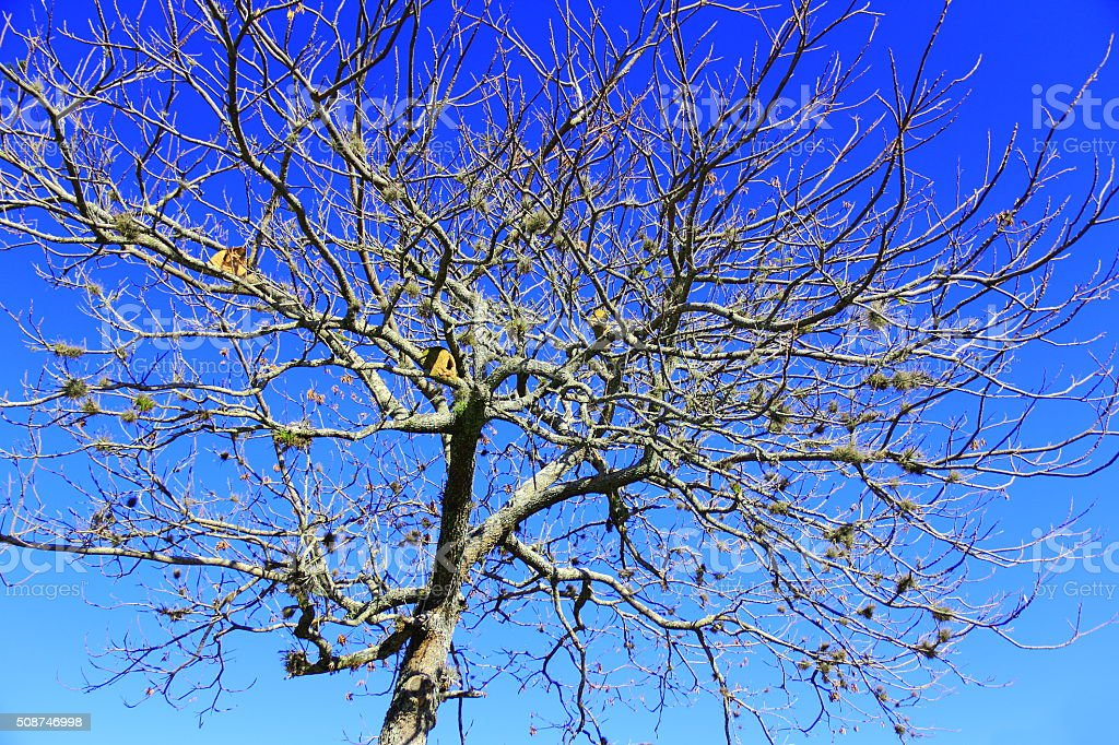 Tropical tree resting for Spring. Hi Res stock photo