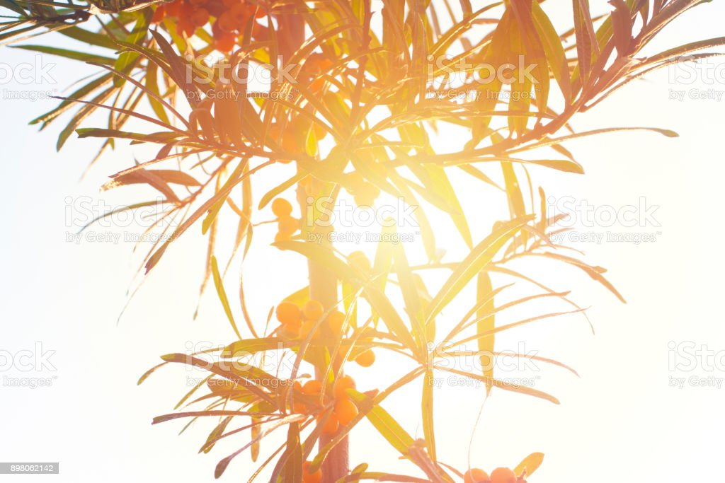 Tropical tree shape in bright sun light. stock photo