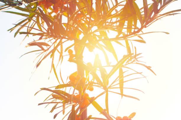Tropical tree shape in bright sun light. stock photo