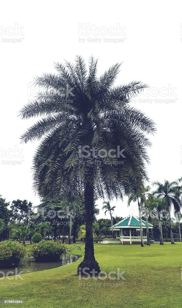 tropical tree  texture and pattern stock photo