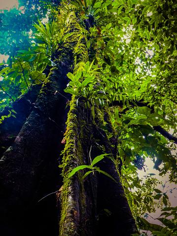 Tropical ecosystem