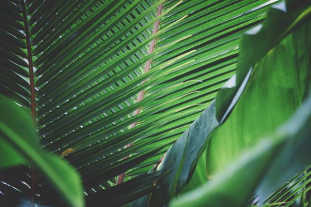 tropische bäume hintergrund - palmengarten stock-fotos und bilder