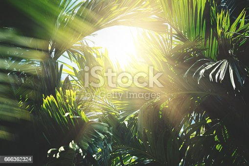 Green abstract background with palm and banana trees leaves