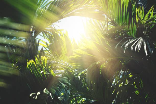 Tropical trees background picture id666362324?b=1&k=6&m=666362324&s=612x612&w=0&h=iblbqrkcdj1 lqg1lfbv84djy q zy1hrreyk5eeice=