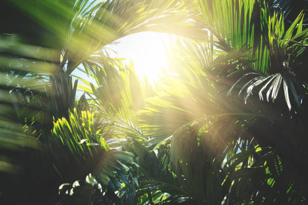 Tropical trees background stock photo