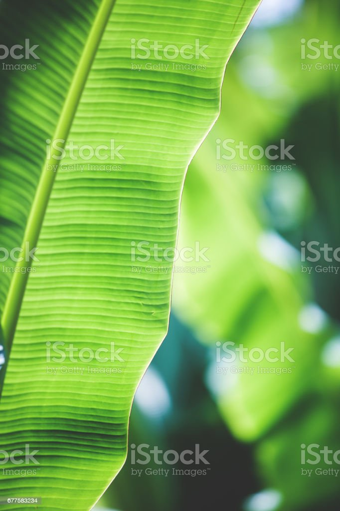 Tropical trees background royalty-free stock photo