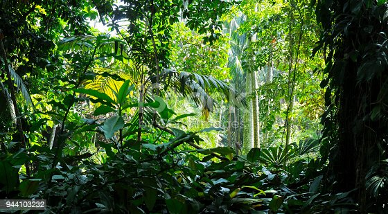 Tropical trees in the sunlight - Background - Jungle