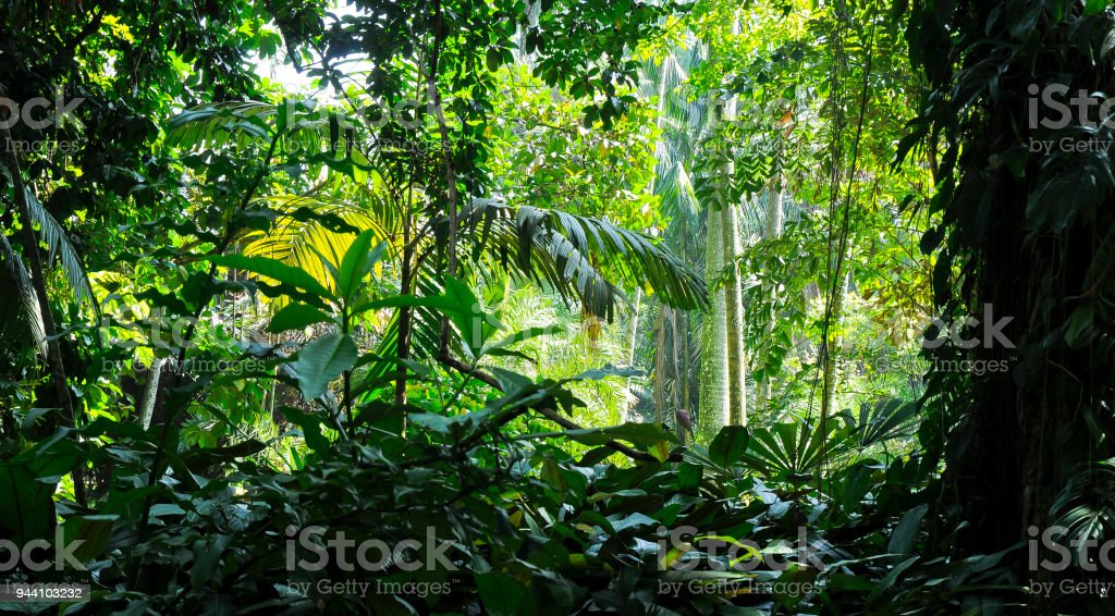 Tropical trees in the sunlight - Background - Jungle stock photo
