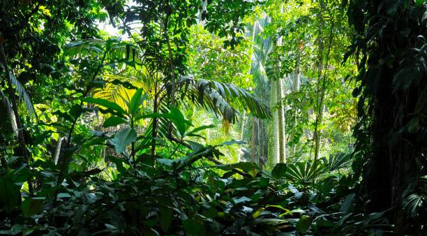 tropical trees in the sunlight - background - jungle - jungle стоковые фото и изображения