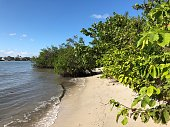 mangroves and sea grapes on the beach of a tropical island