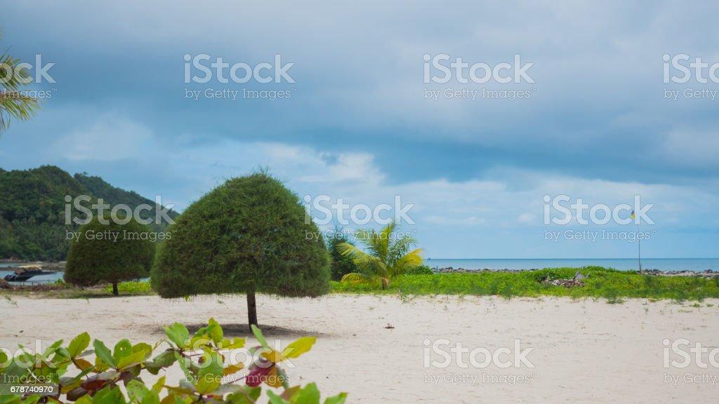 Tropikal ağaçlar deniz kenarı. SAMUİ, TAYLAND. royalty-free stock photo