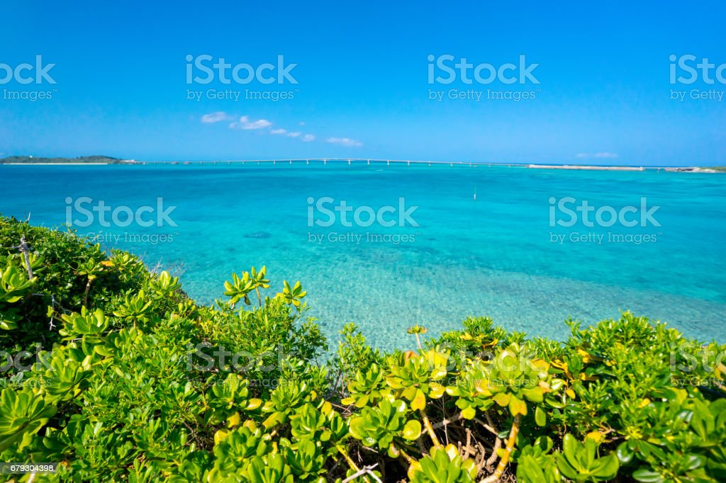 Tropical trees over blue ocean royalty-free stock photo