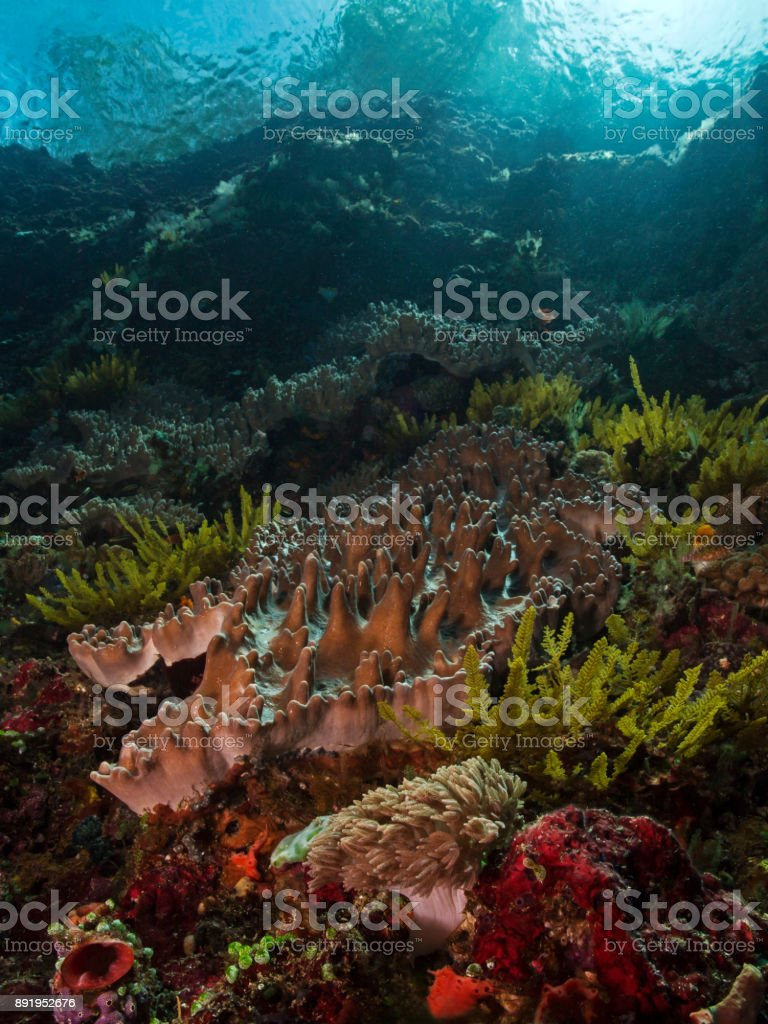 Tropical underwater garden, Tropische Unterwasserlandschaft stock photo