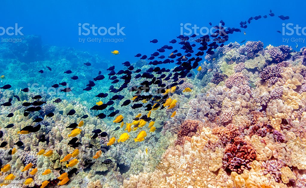 Tropical Underwater Landscape of Fish and Coral stock photo