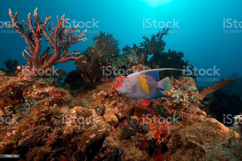 Tropical underwater life in the Red Sea royalty-free stock photo