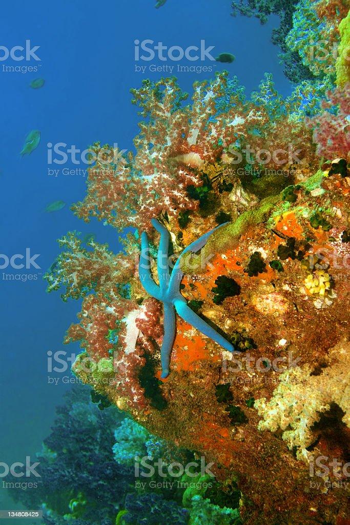 Tropical Underwater scenic starfish royalty-free stock photo