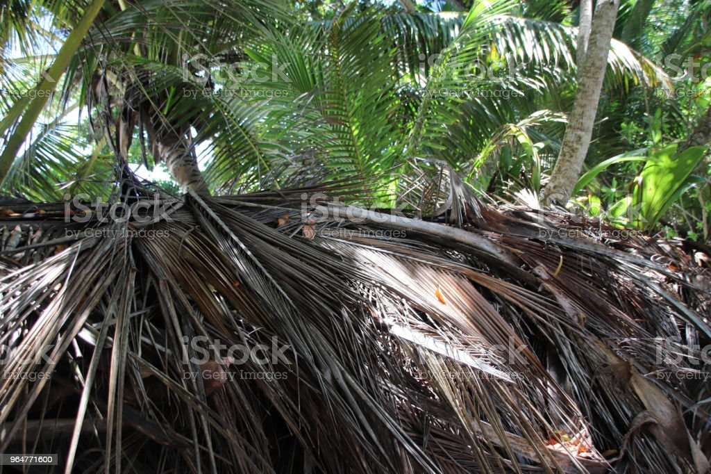 Tropical Vegetation, Anse Lazio, Praslin, Seychelles, Indian Ocean, Africa royalty-free stock photo