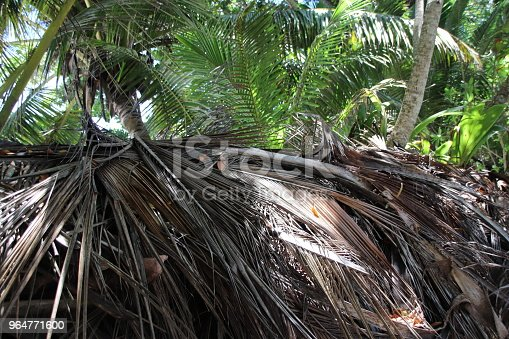 Tropical Vegetation Anse Lazio Praslin Seychelles Indian Ocean Africa Stock Photo & More Pictures of Africa