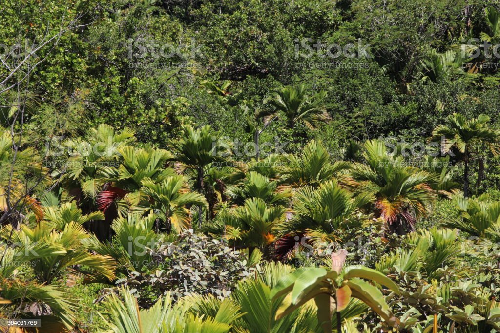 Tropical Vegetation, Nature Trail, Mt. Plaisir, Praslin, Seychelles, Indian Ocean, Africa - Royalty-free Africa Stock Photo