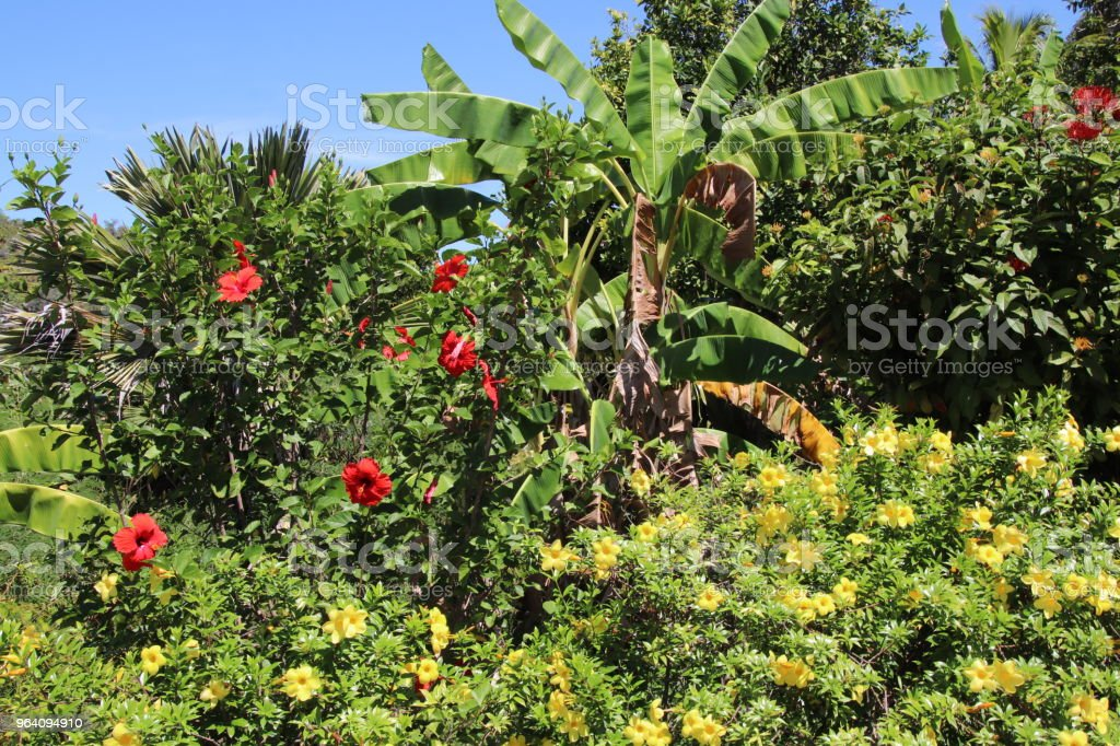 Tropical Vegetation, Nature Trail, Mt. Plaisir, Praslin, Seychelles, Indian Ocean, Africa - Royalty-free Africa Stock Photo