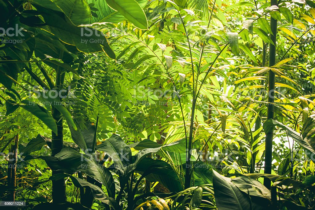 Tropical vegetation with green plants and trees stock photo